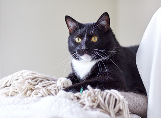 black and white cat lying on plaid at home