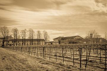 Vintage effect. Agricultural Landscape with vineyard.