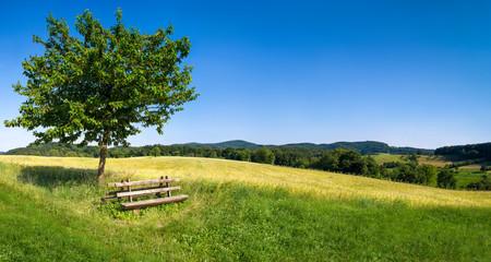 Grüne Landschaft mit blauem Himmel und Parkbank - fototapety na wymiar