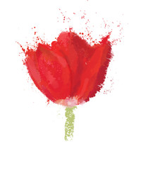 Vector red  tulip isolated.