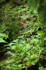 Small brook with lush vegetation in cloud forest in Ecuador