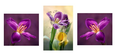 Canvas Afdrukken  - Tulipany mix