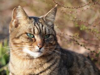 凛々しい表情の猫