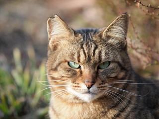精悍な表情の猫