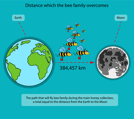 Infographics on bees