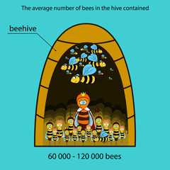 Bee infographics