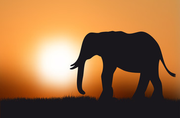 Silhouette of elephant at sunset