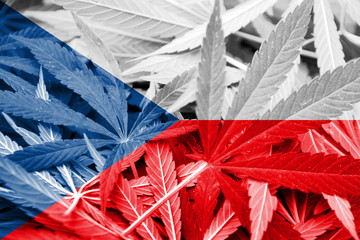 Czech Republic Flag on cannabis background.