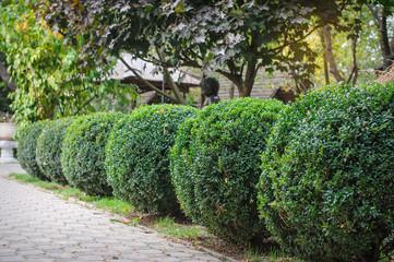 landscaped green park, trimmed round shape
