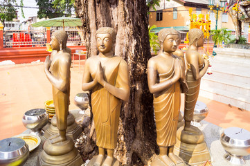 Buddha immages under the tree