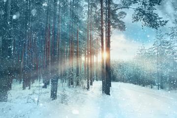 frosty winter landscape in snowy forest
