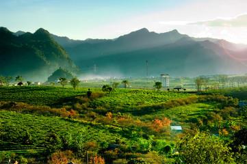 Canvas Prints Hill Tea hills in Moc Chau highland, Son La province in Vietnam