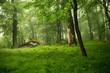 Wald-Natur-Erlebnis
