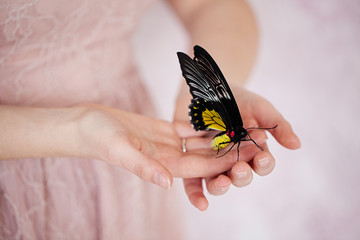Beautiful exotic butterfly sitting on the girl hand