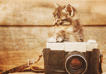 Cute kitten with old photo camera, vintage image