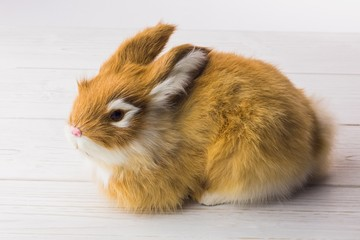 Ginger bunny rabbit