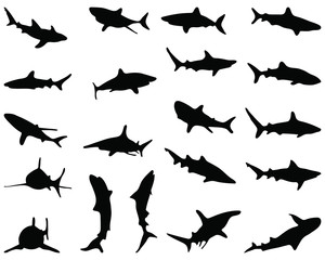 Black silhouette of sharks, vector illustration