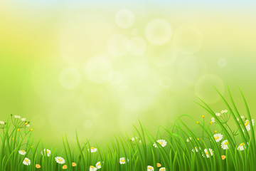 Spring nature background with green grass and flowers