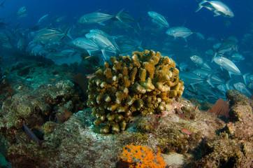 cabo pulmo reefs