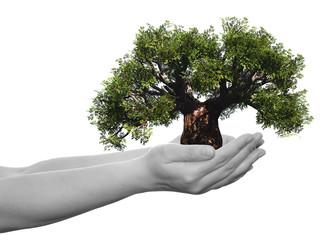 Conceptual human hand and tree