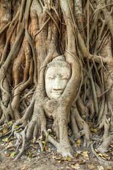 Buddha, Wurzeln