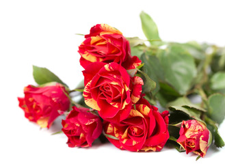 Bushed red roses background