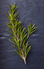 Rosemary herbs with a small piece of rosemary beside it  on dark