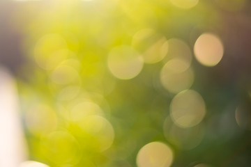 Abstract green natural bokeh background