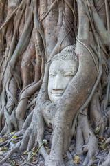 Wurzel buddha