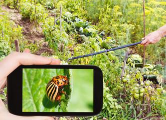 man taking photo of spraying pesticide in garden