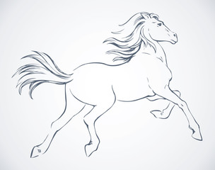 Prancing horse. Vector drawing