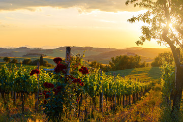 Wall Murals Vineyard Tuscany vineyards in fall