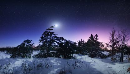 Beautiful winter night in the forest in Ukraine. Full moon