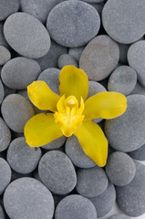 Yellow orchid and gray stones background