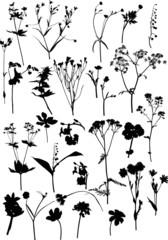 twenty eight black wild flowers collection