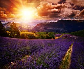 Garden Poster Brown lavender field Summer sunset landscape