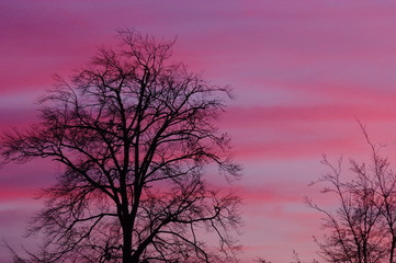 Pinkfarbener Sonnenuntergang mit Bäumen 8