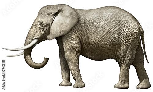 elephant photo libre de droits sur la banque d 39 images image 79403141. Black Bedroom Furniture Sets. Home Design Ideas