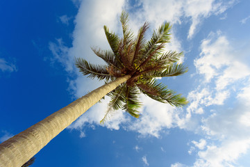 Palm tree with sunny day. Lonely tree. Tropic.
