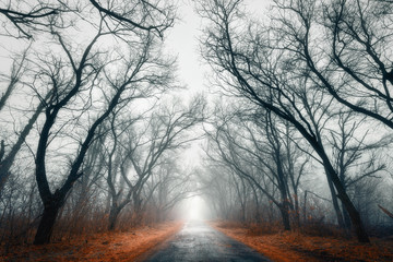 Wall Murals Bestsellers Mysterious autumn forest in fog