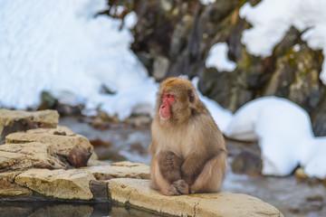 日本猿 温泉