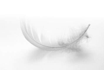 white swan feather