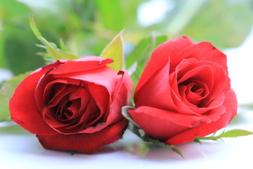 Double red rose