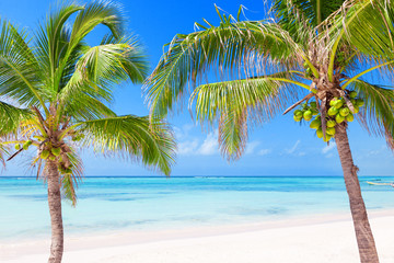 Tropical beach with coconut palms and transparent waters