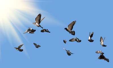 Pigeons flying to the sun