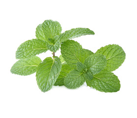 Mint leaves isolsted white background