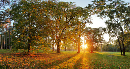 Panorama of Summer - autumn tree in forest park