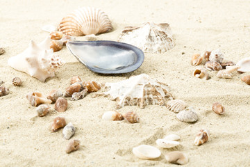 Sand, Muscheln, Urlaub, Symbolbild