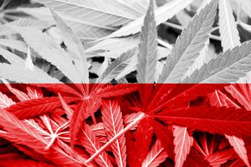 Poland Flag on cannabis background. Drug policy.