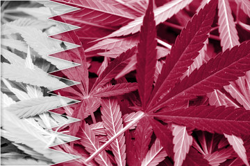 Qatar Flag on cannabis background. Drug policy.